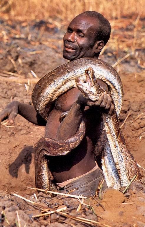 akhirnya anacondapun berhasil ditangkap